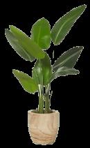 Une plante verte dans un pot en bois